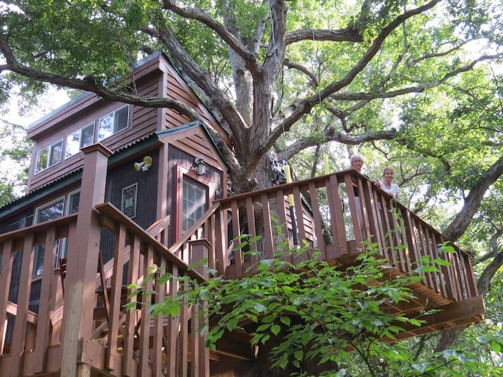 White Oak treehouse by Garden of  the Gods