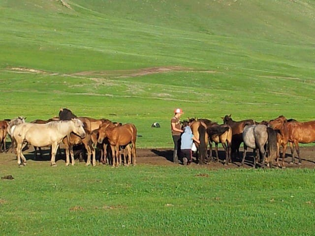 Stay in Mongolian Nomadic Family