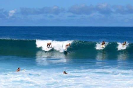 Surfers Paradise #3C - 哈雷伊瓦