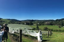 Views from the Upper reaches of the propertyPinot