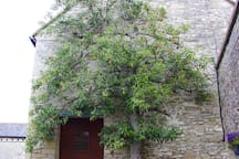 The old pear tree