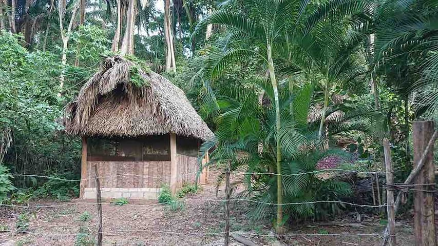 Jungle glamping in The Cereza Cabaña
