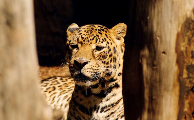 Photo of Houston Zoo