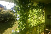 Side Porch with Morning Glories in September