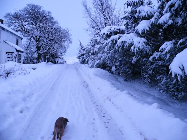 the beautiful snowy  approach to the house in Winter