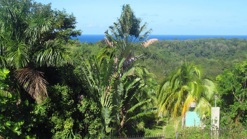 Mango Studio Cabana -Ocean View Exotic Flower Farm