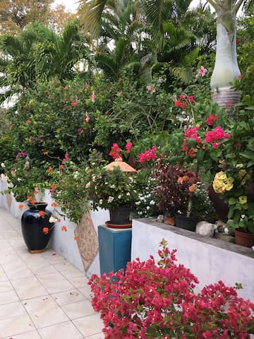 Cottage Tropical Garden - Le Marin - Rumah