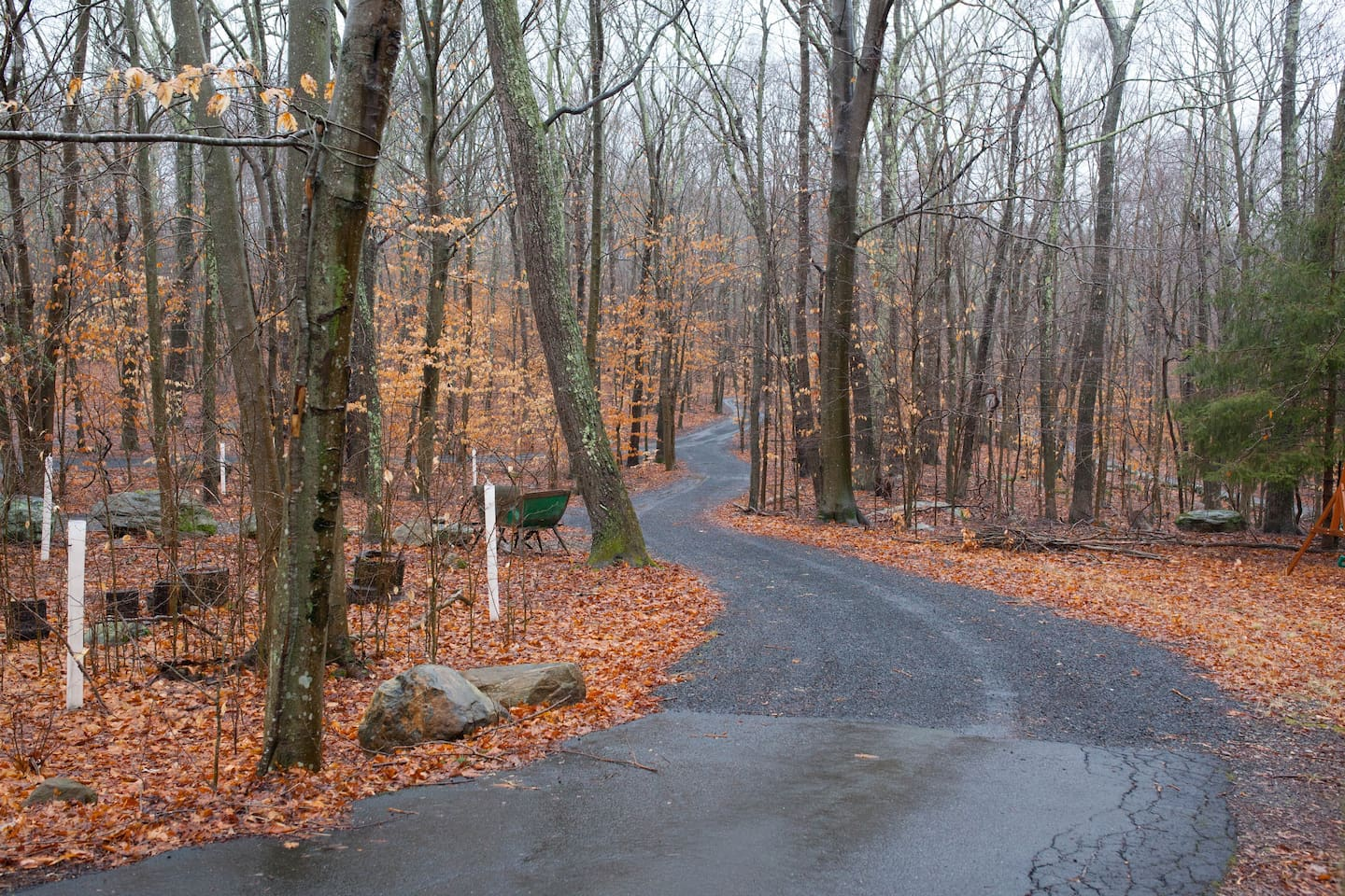 """Come to our Forest!  Walk down our private lane to our """"100 acre"""" woods."""