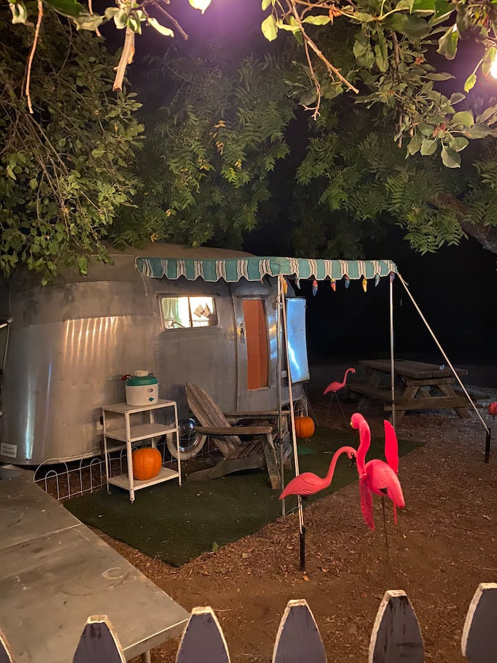 Glamping in a 1955 Airstream