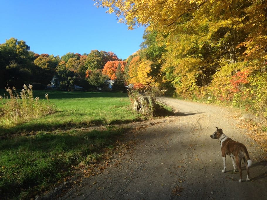 The driveway - you can see the house and studio at the top. Fall colors are AMAZING!