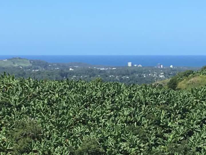 Banana Panorama
