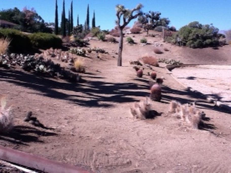 Birds' Eye View Cactus garden