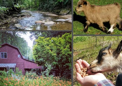 BARN HOUSE with River, Goats, Fire Pit, & Hot Tub!