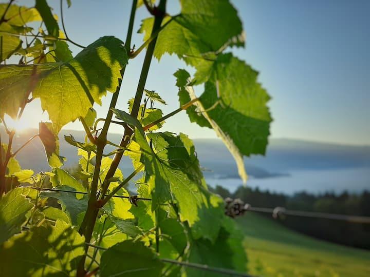 Auszeit am Weinhof