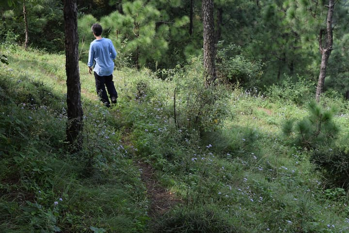 The Ravine - Kasauli