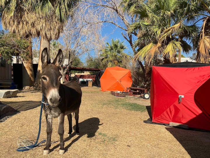 Save$ Glamping 10 min to the strip 420 friendly T2