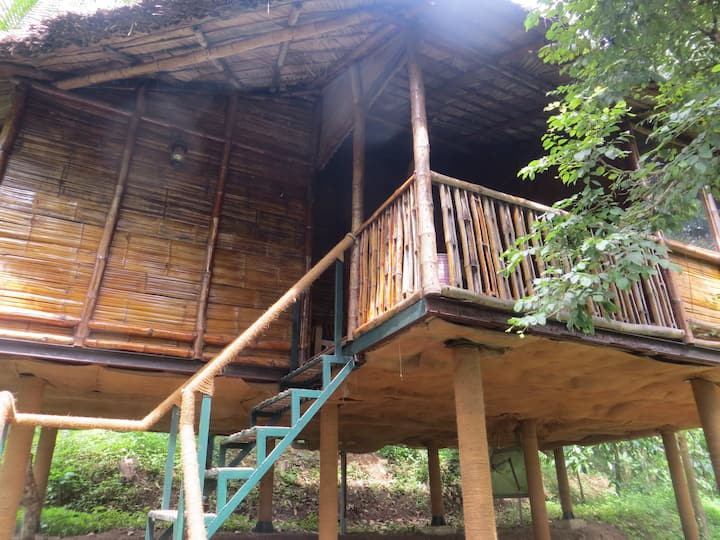Forest faced Bamboo Tree House