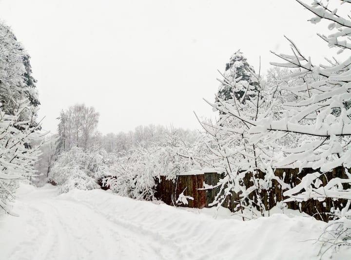 Уютный дом в сосновом лесу