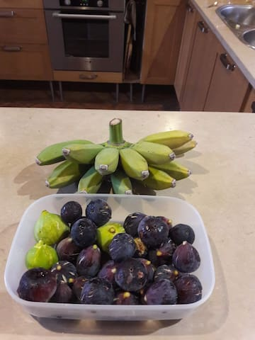 Fresh Algarve figs and local stubby bananas.