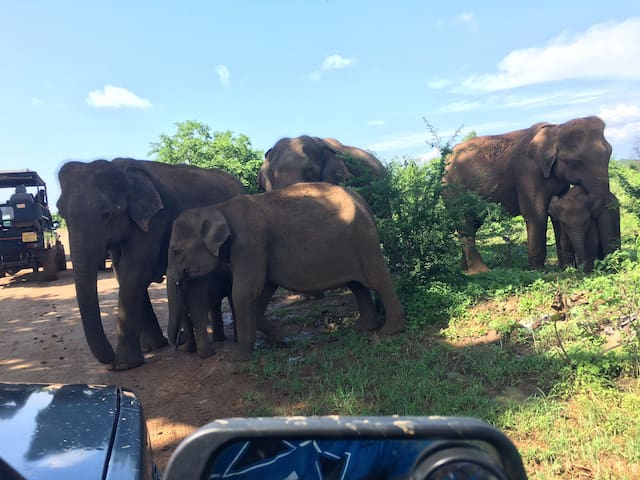 Elephant family in front of my Safari Jeep