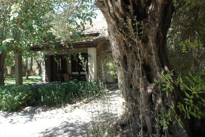 Mandalina bahçeli bağ evi