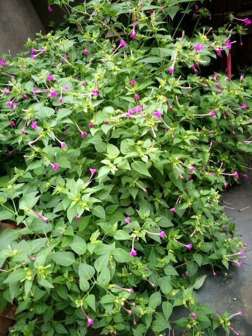 独立的院落,盛开的小花!