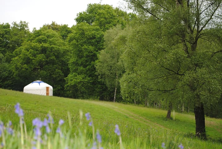 Bluebell Yurt - Silligrove Farm - Rock - Yurt