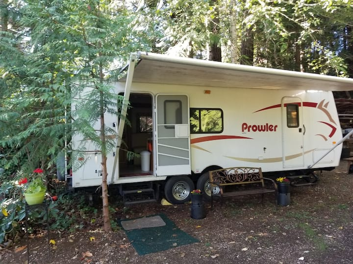 Secluded Trailer On The Olympic Peninsula