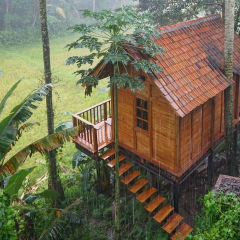 A tiny wooden house in the middle of ricefields