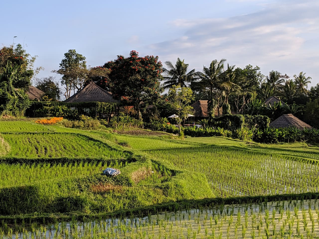 View of Property from Paddy Fields.  I love to take the kids for walks in the paddies.