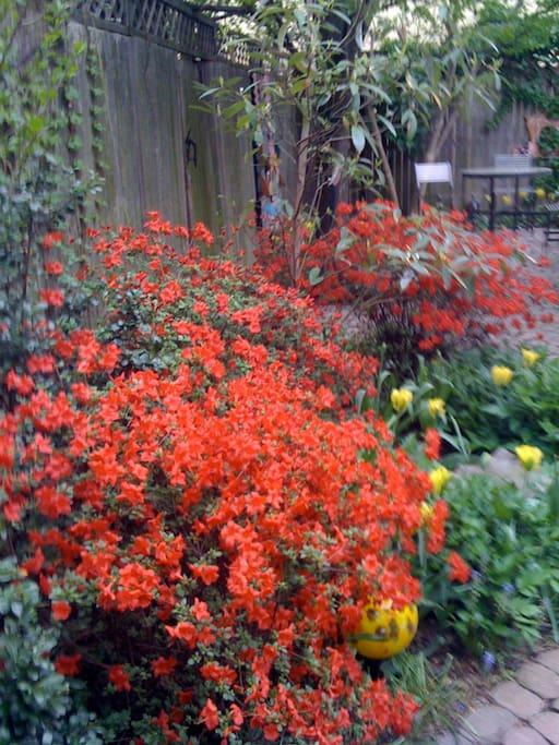 the garden in the spring