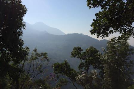 Green Paradise - Munnar