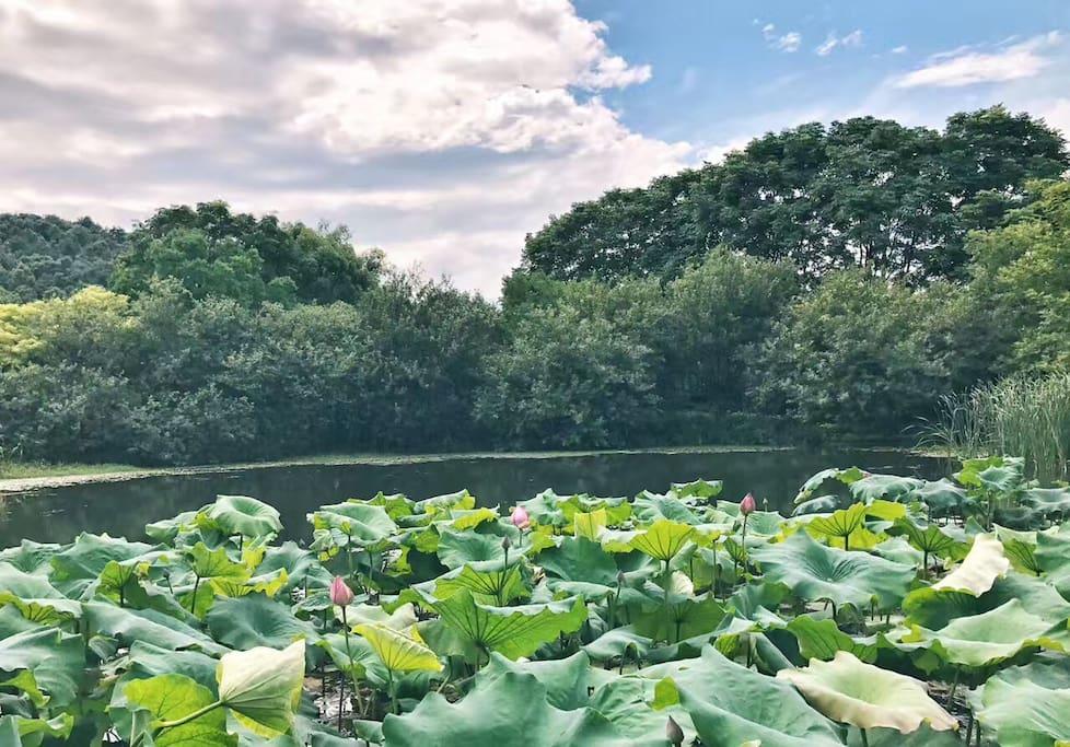 家门口的生态公园,西湖的水源地