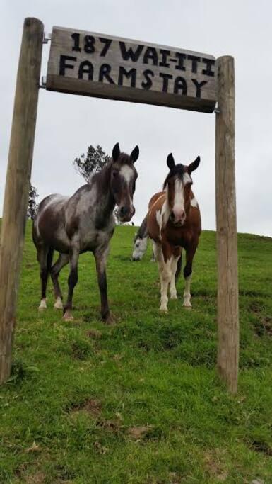Waiiti Farmstay horses