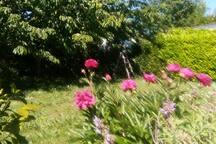 jardin côté nord