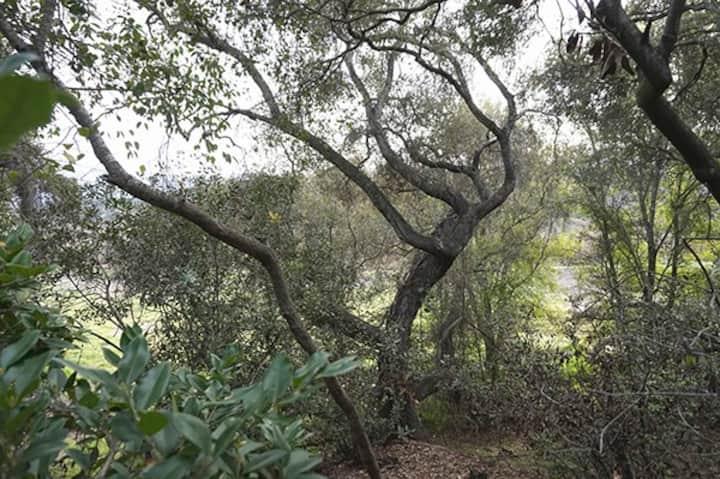 "Welcome to the ""Oak Tree Art Camp"" Art Studio/Apt"