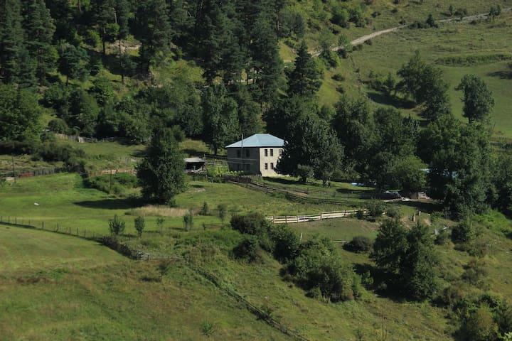 Koba Tsipiani's Retreat In Nature