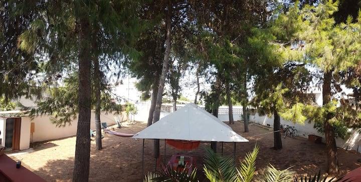 VILLA PAOLA - Ampia villa con pineta a 200mt mare
