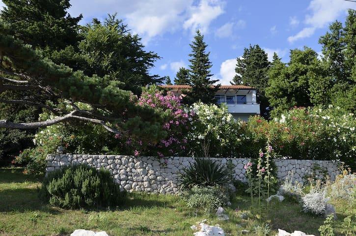 Our house & garden.