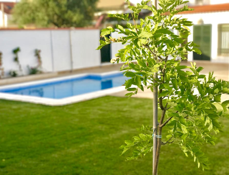 Alojamiento nuevo con piscina para 4 personas for Alojamiento con piscina