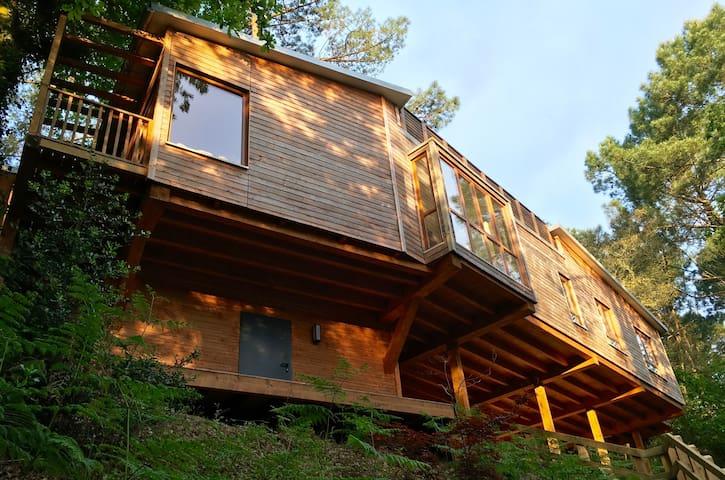 Contemporary Hossegor Tree House - Hossegor - Casa