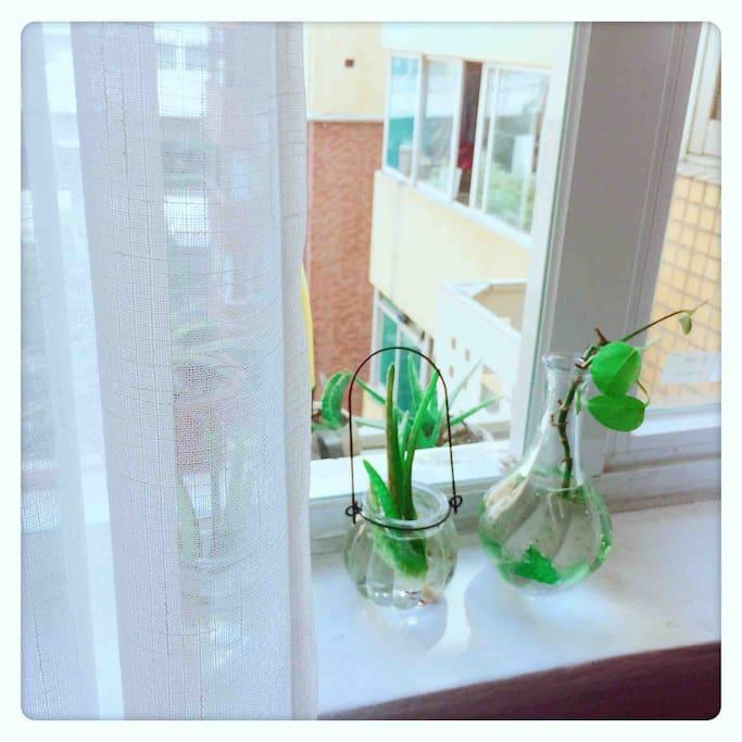 房间窗户小绿植