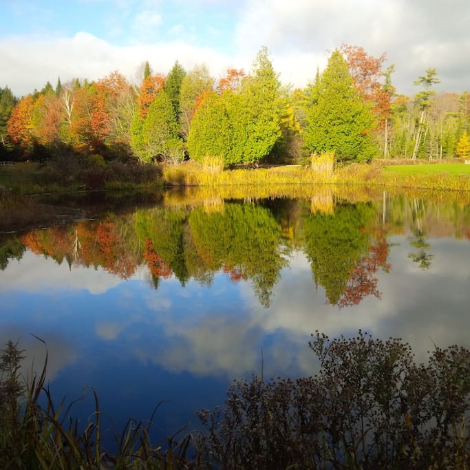Fall colours around treehouse and ponds