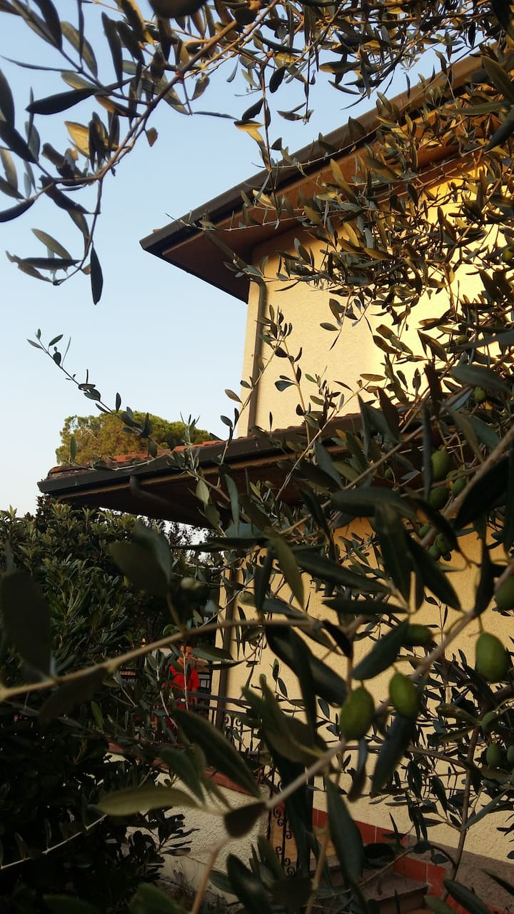 Le magnolie senior