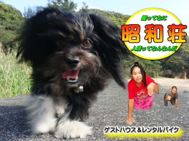 奄美大島ゲストハウス『昭和荘』女性部屋ドミトリー ~昭和荘は島旅を楽しむ者達のオアシス的よりどころ~
