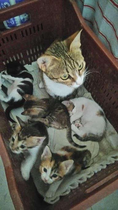 Chichi et ses chatons!