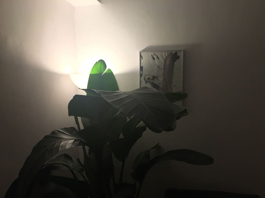 Plants, light and art