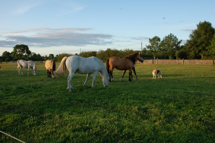 """""""The Little Flock Farm"""": B&B at Lough Ree"""
