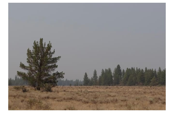 Camp on 1.5 acres  in South Oregon on raw land.