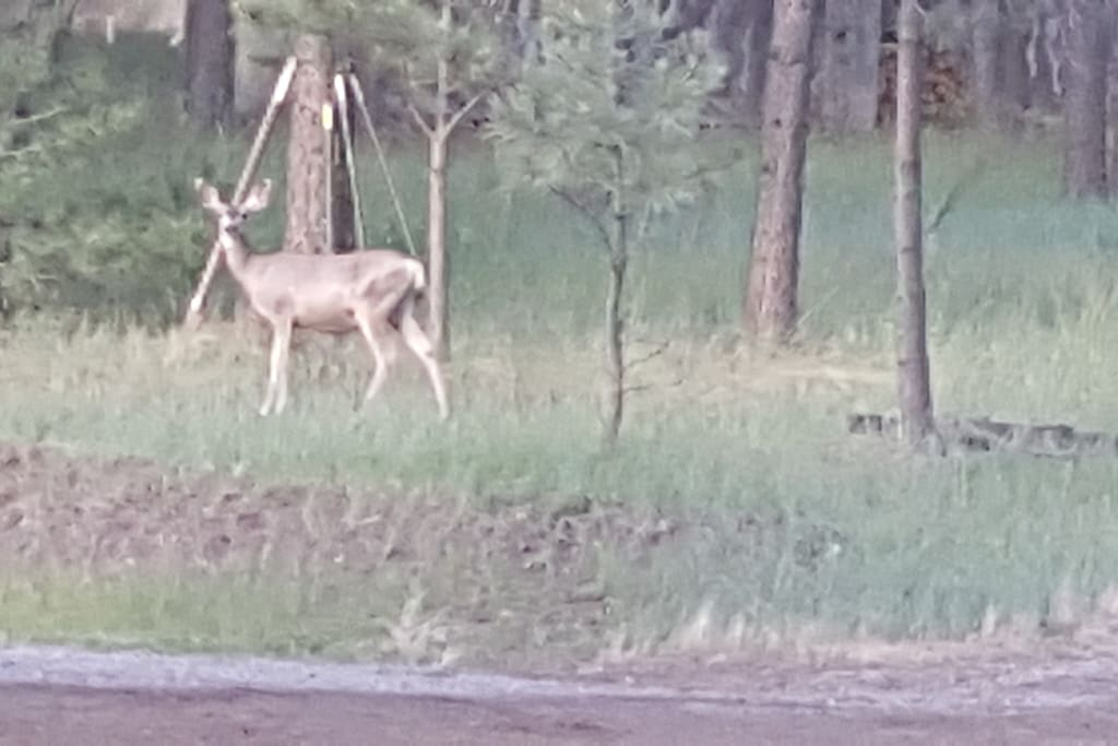 This deer was off to side of the road of where the cabin is located